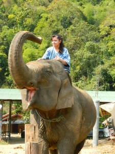 Elephants In Chiang Mai Thailand
