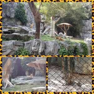 Chiang Mai Zoo - Togetherinthailand.com