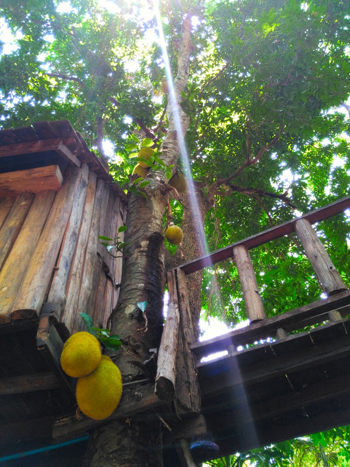 Rabaeng Pasak Treehouse Resort