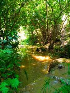Creek at Rabaeng Pasak Treehouse Resort