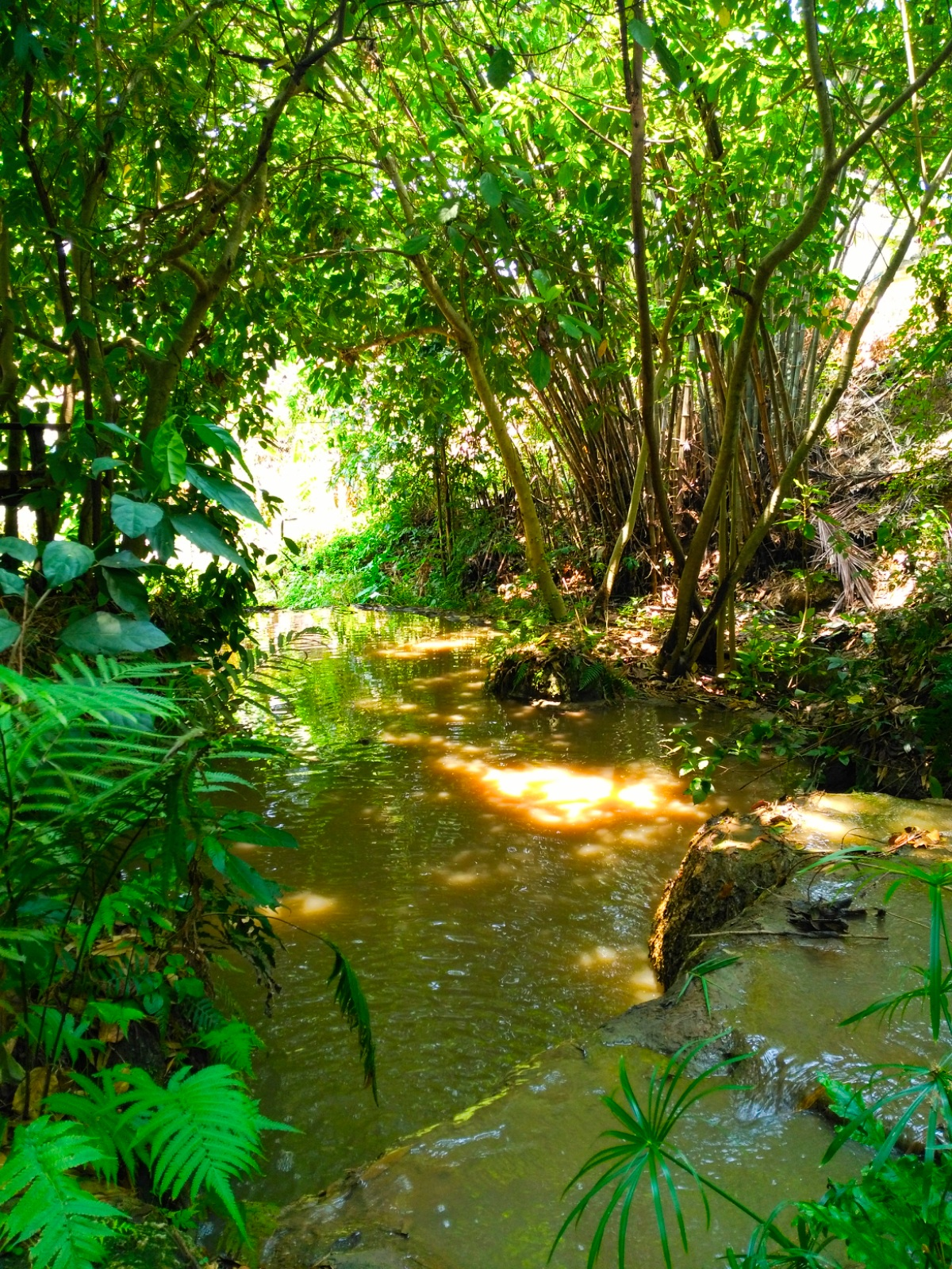 Creek at Rabaeng Pasak Treehouse Resort