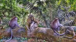 Sacred Monkey Forest - Ubud, Bali, Indonesia
