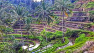 Tegalalang Rice Terrace in Ubud, Bali, Indonesia
