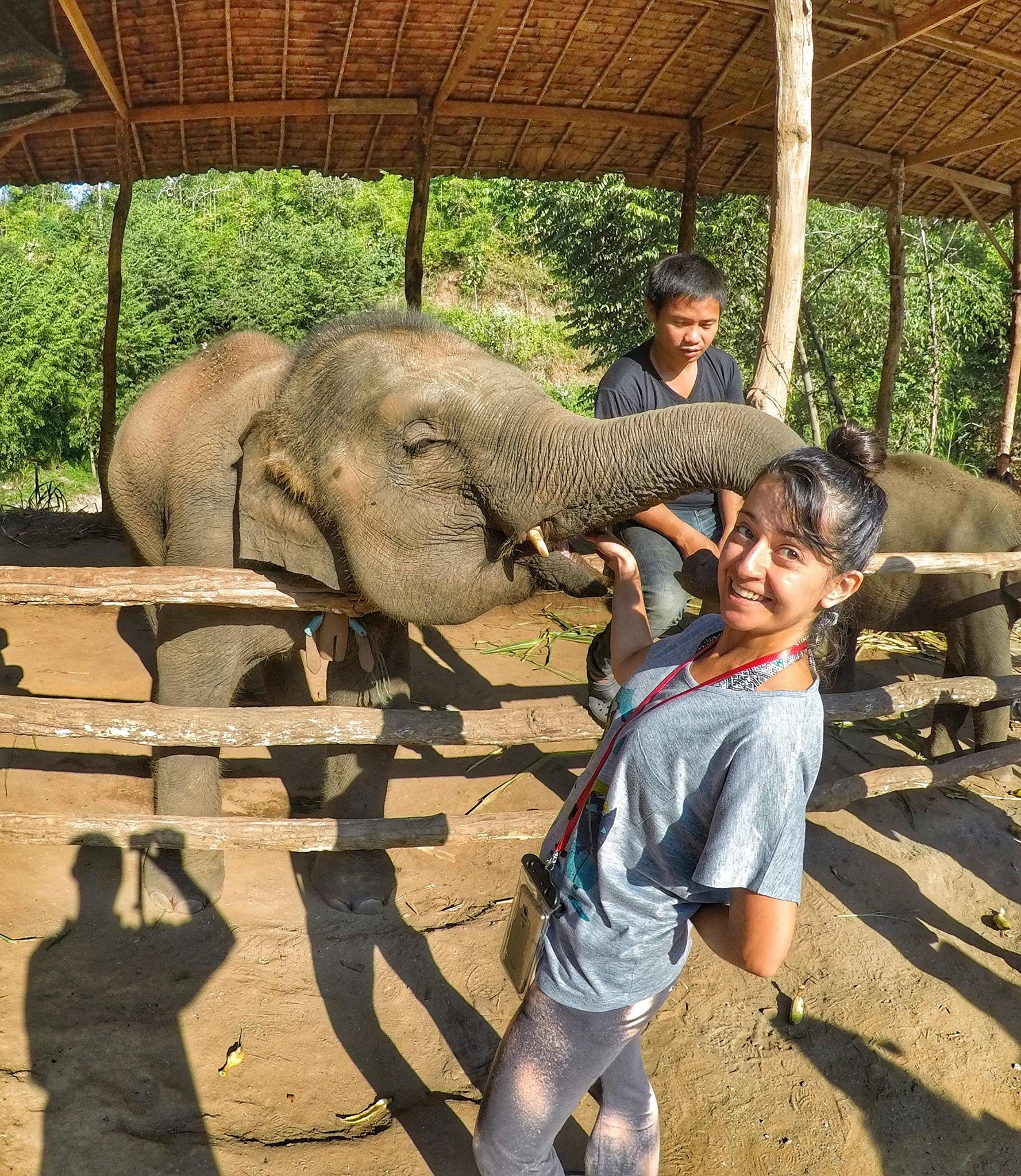 feeding elephants in Chiang Mai, Thailand - Top Things to do