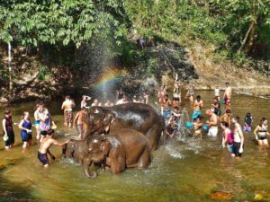 Elephant Sanctuary Chiang Mai, Thailand- ethical elephant tour - shower in the river