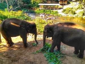 ethical elephant tour Chiang Mai, Thailand