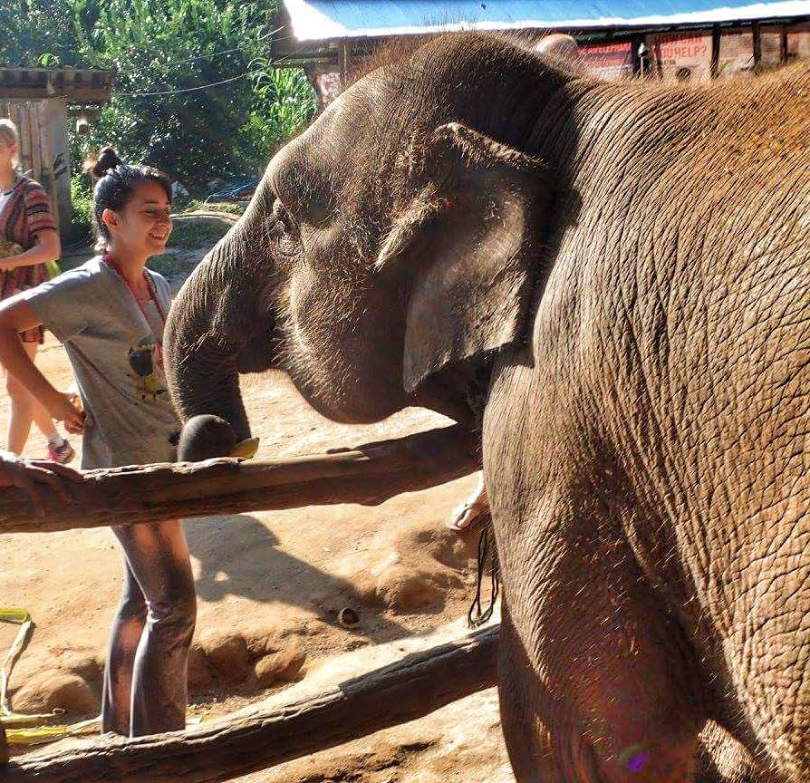 Top Things to to in Chiang Mai, Thailand - Elephant Jungle Sanctuary Tour