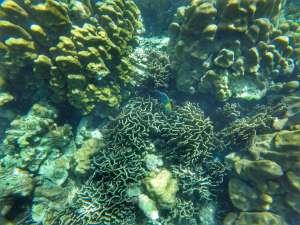coral and tropical fish snorkeling - Koh Lanta, Thailand