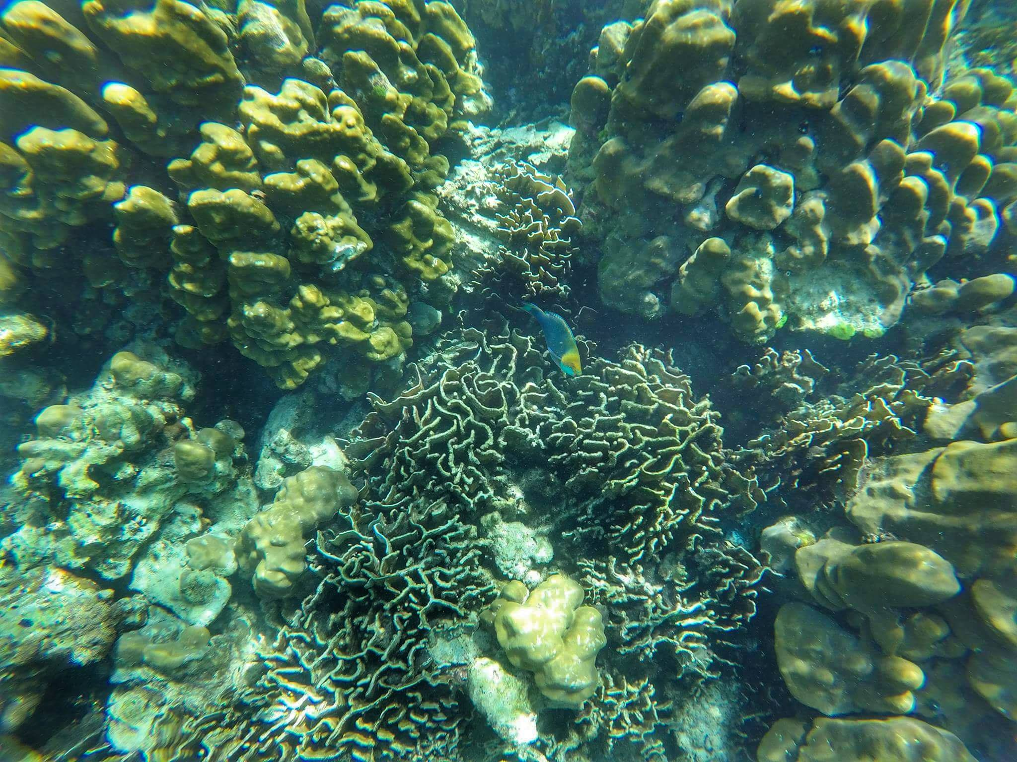 coral and tropical fish snorkeling - Koh Lanta, Thailand