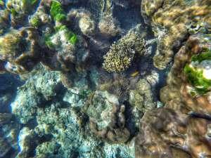 coral and marine life Koh Lanta to Koh Rok, Thailand
