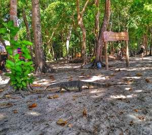 monitor lizard - Koh Rok, Opal Speedboat Tour From Koh Lanta, Thailand