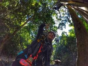 abseil down tree - zipline Chiang Mai