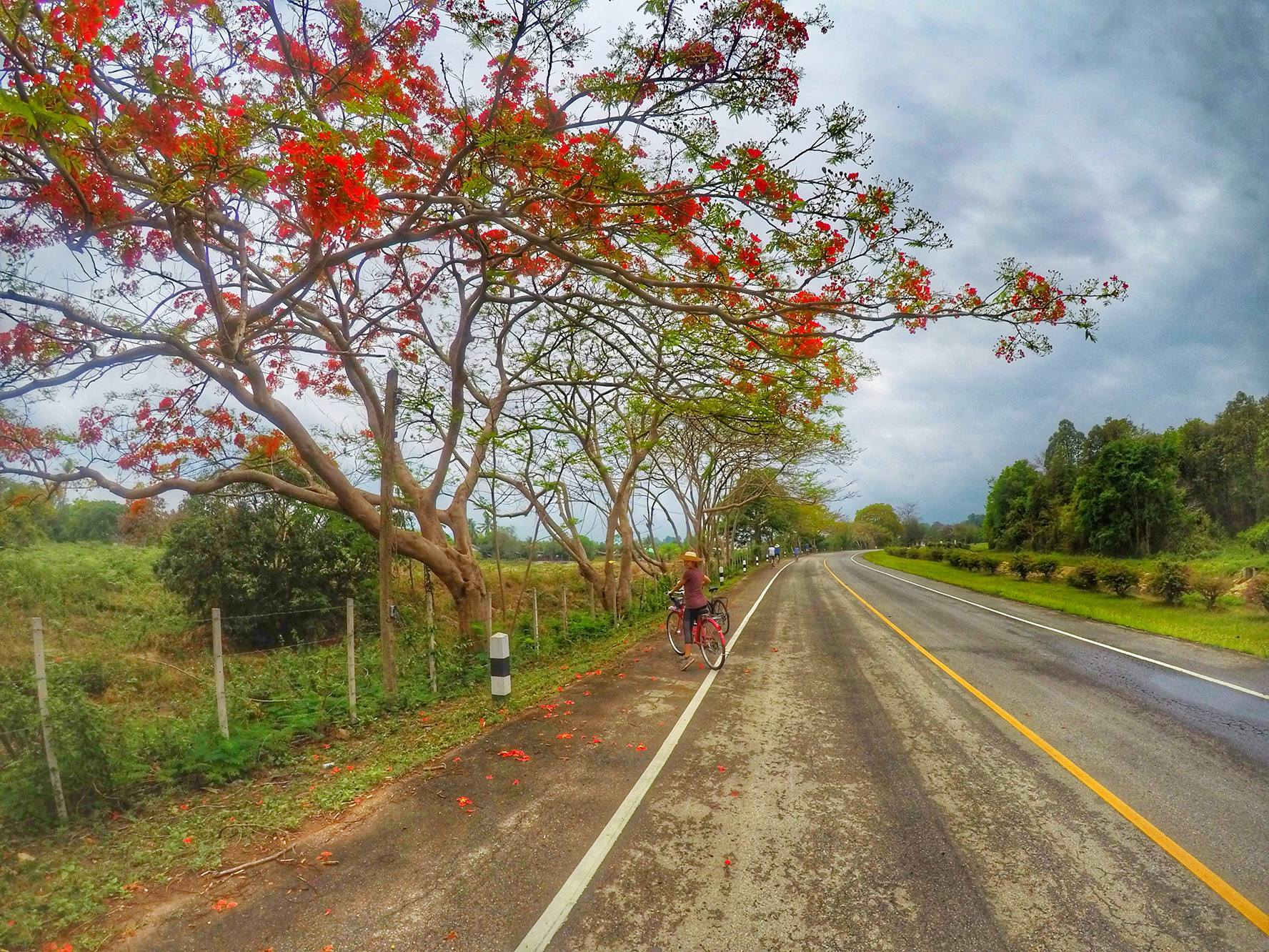 cycling outcide the city - Chiang Mai Thailand Tour
