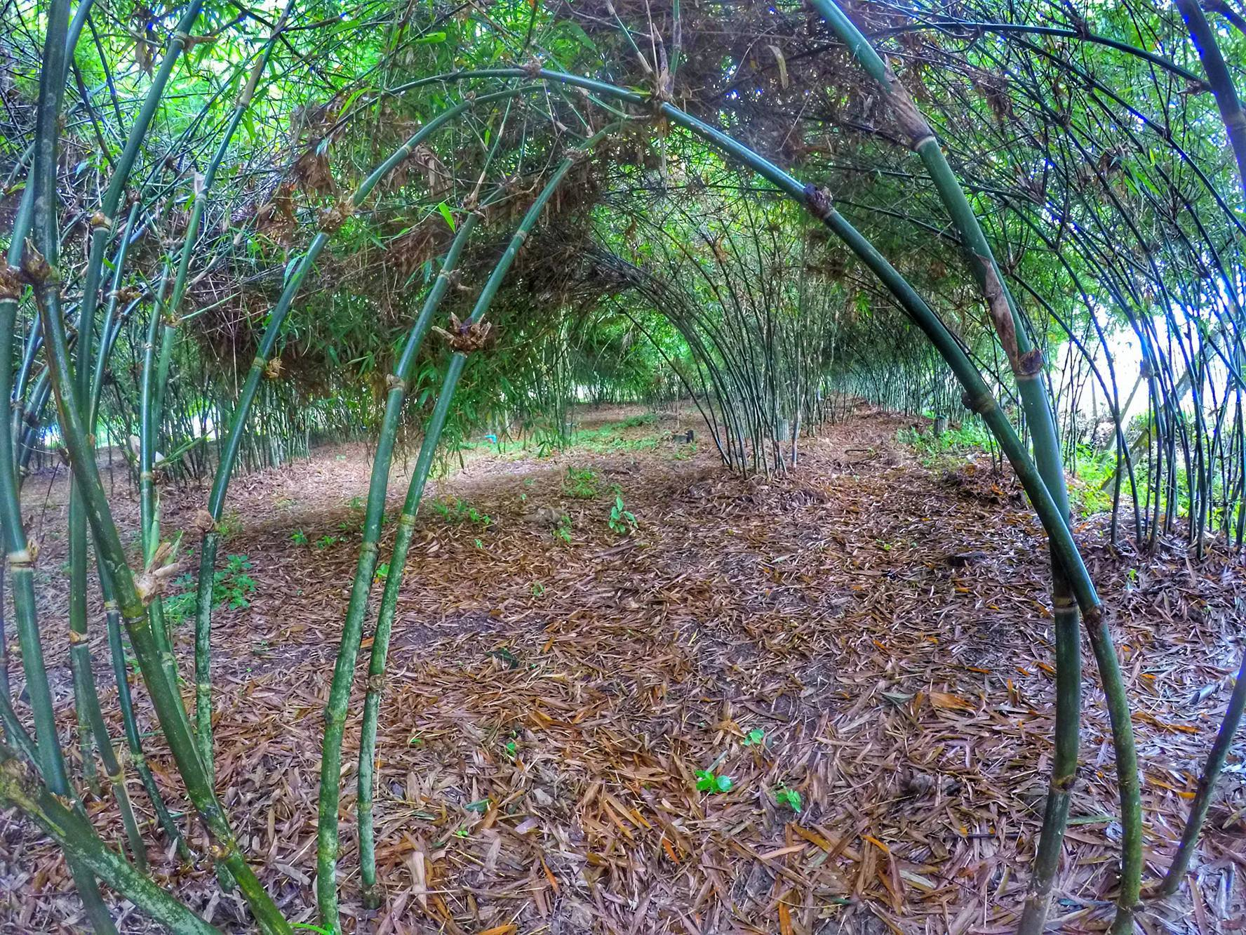 Chiang Mai Tour - bamboo farm with local guide