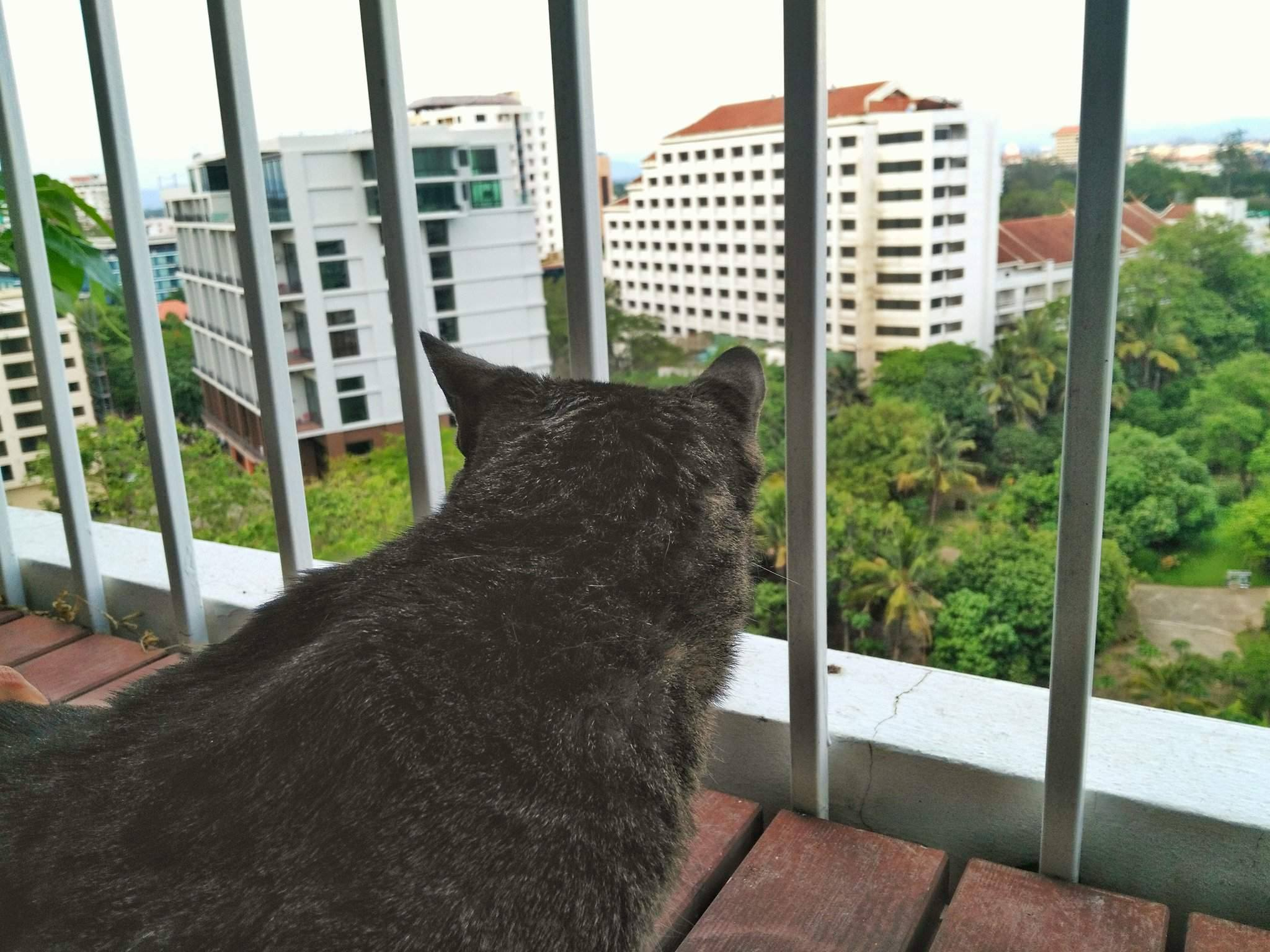 bringing cat from Thailand to US