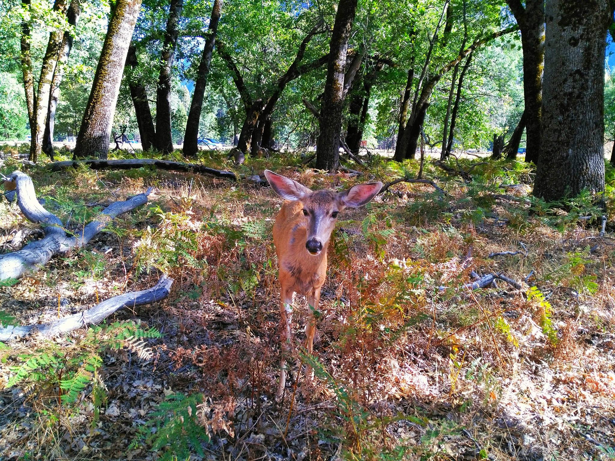 things to see in yosemite in one day - Valley Animals