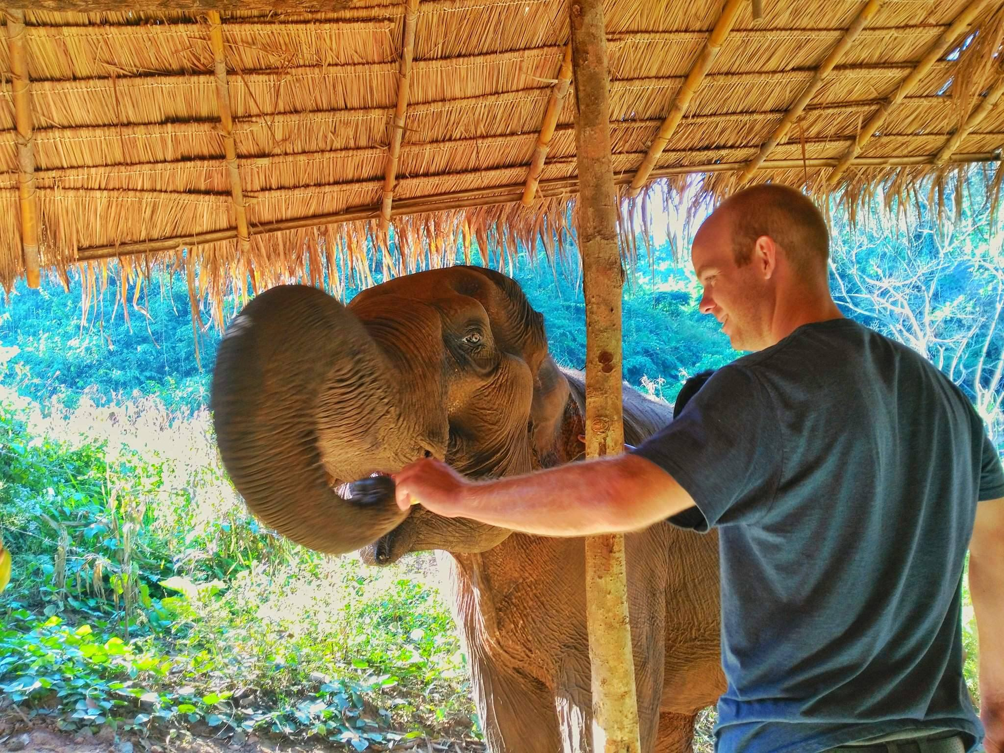 best things to do in Chiang Mai - feed elephants