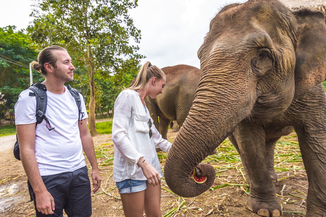 day trips from Chiang Mai -elephant nature park