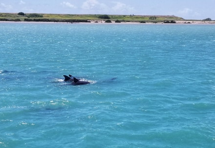 South Padre Island Activities - dolphins